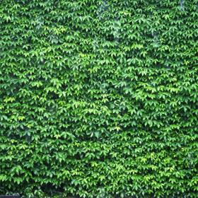 Adesivo  Mural Verde