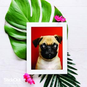 Poster Pug Vermelho