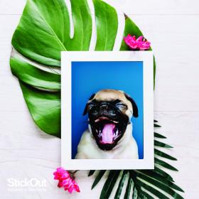 Poster Pug Azul
